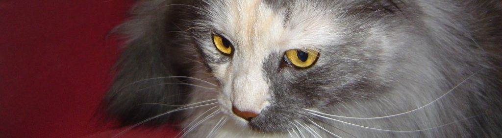 Katze Fienchen, ein Kunde vom Tierarzt in Hamburg Rissen :-)